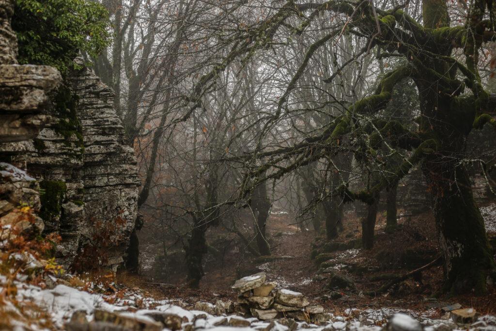 Πέτρινο δάσος στο δρόμο προς Οξυά_zvoura.gr