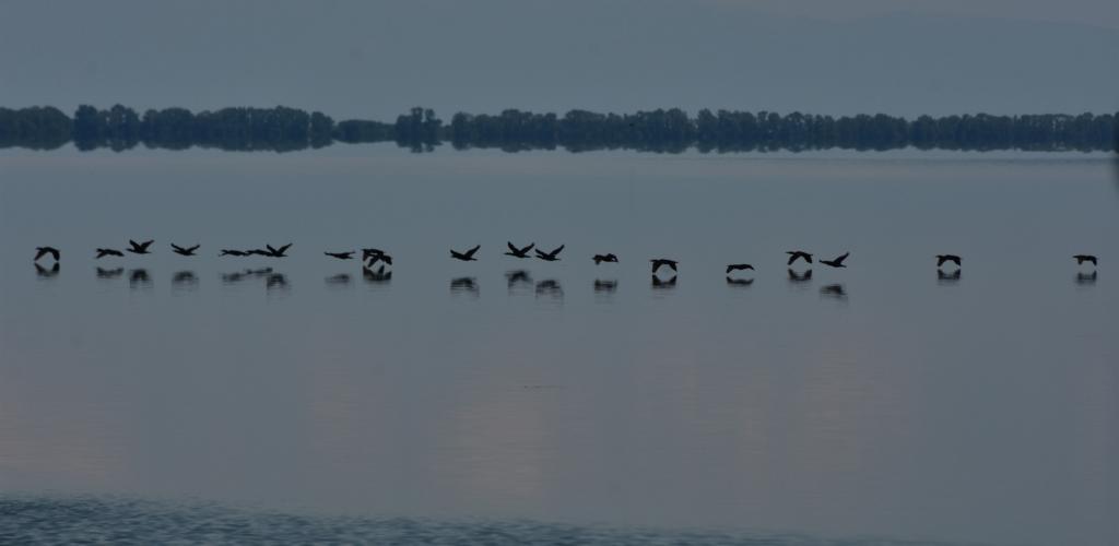 Αποστολή στη Λίμνη Κερκίνη: Χορεύοντας με τα πουλιά της Κερκίνης_zvoura.gr